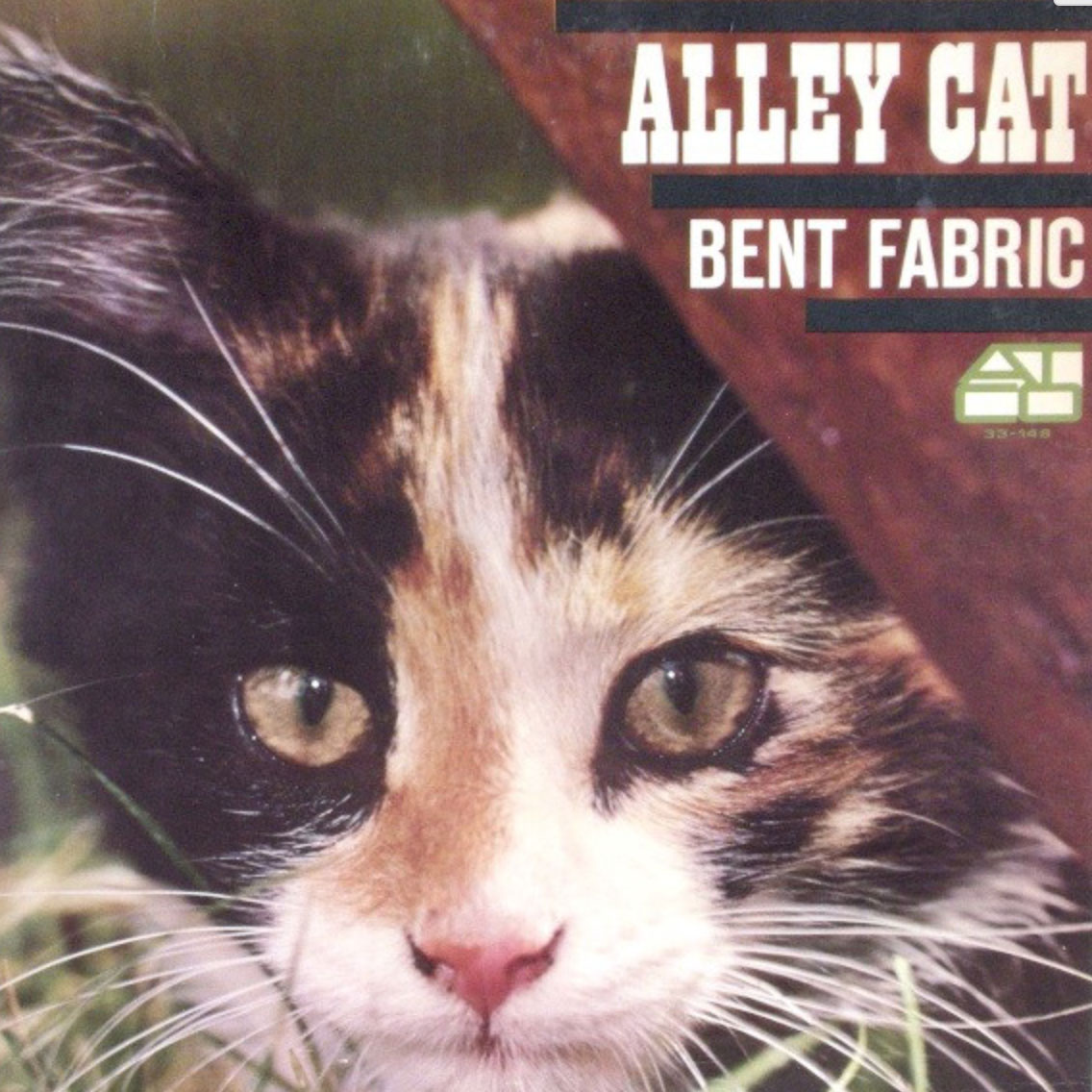 Alley-cat